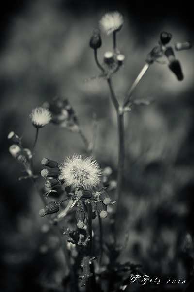 Spring Flowers in Black and White 01