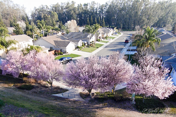 Spring in the Valley 04