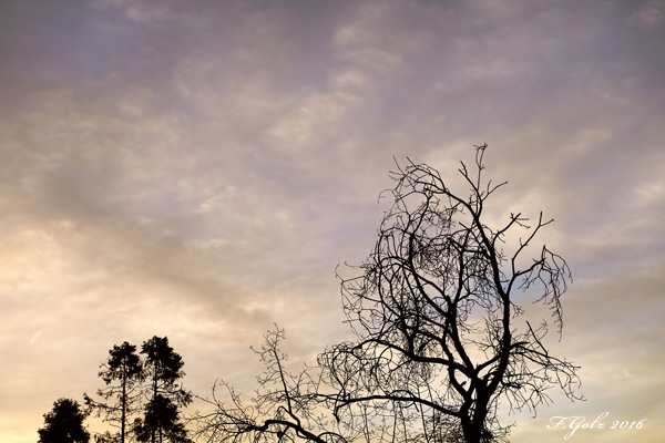 Trees and Clouds 04
