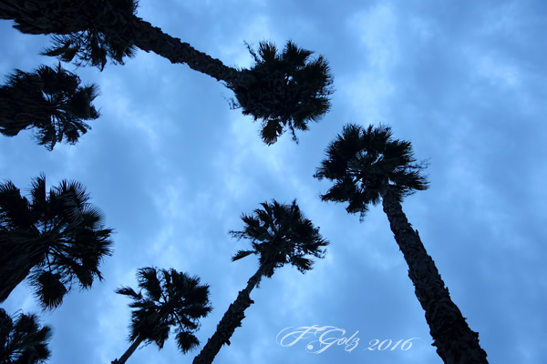Trees and Clouds 06