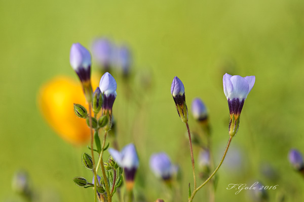 Wildflowers 03