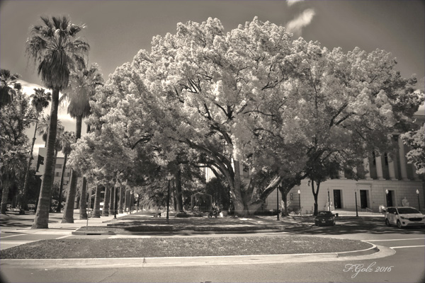 Digital Infrared 01b