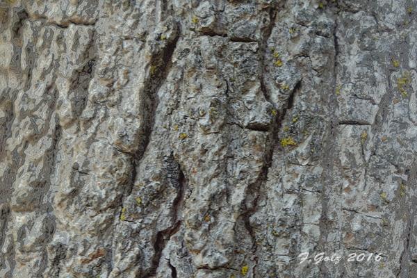 Bark 15