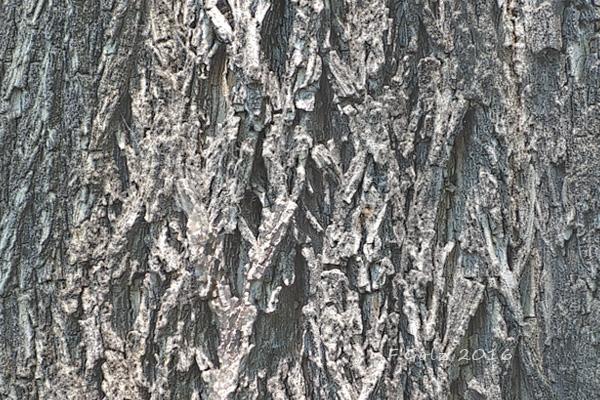 Bark 19