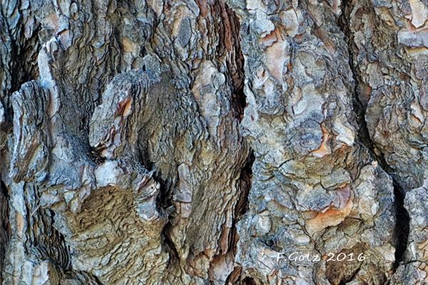 Bark 20