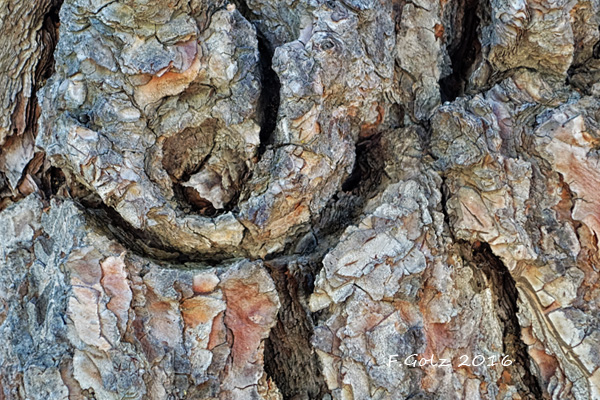 Bark 21