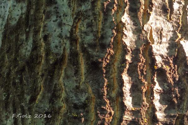 Bark 22