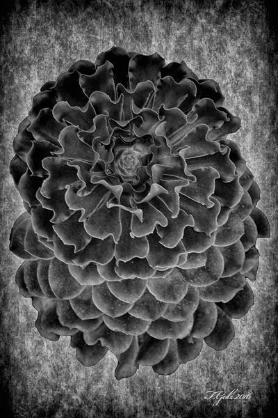 Succulent 05