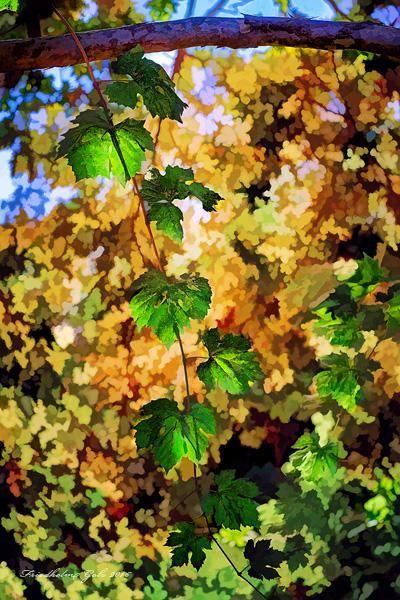 fall-colors-25
