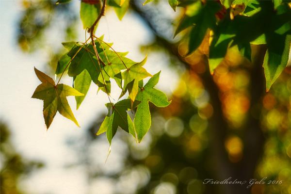 fall-colors-27