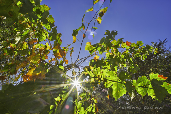 fall-colors-29