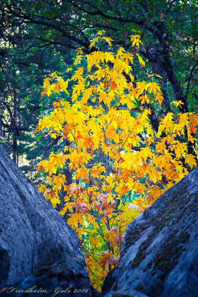 fall-colors-30