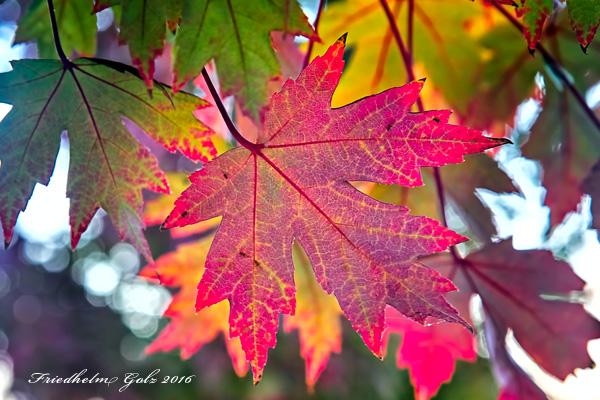 fall-colors-31