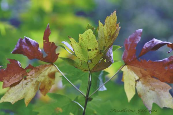 fall-colors-32