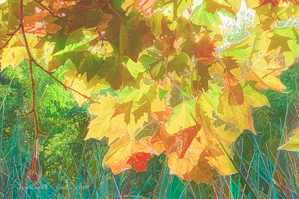 fall-colors-33