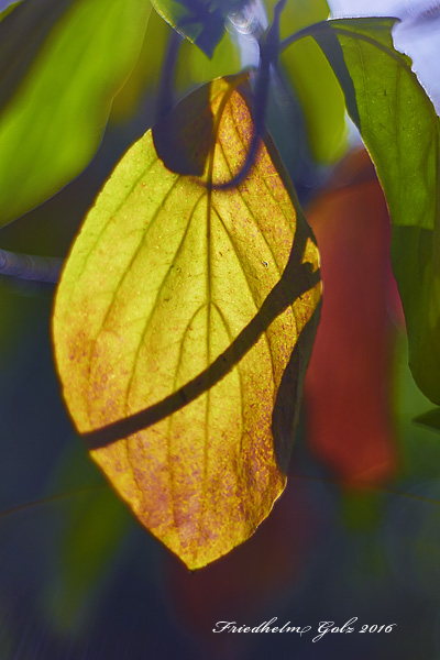 fall-colors-34